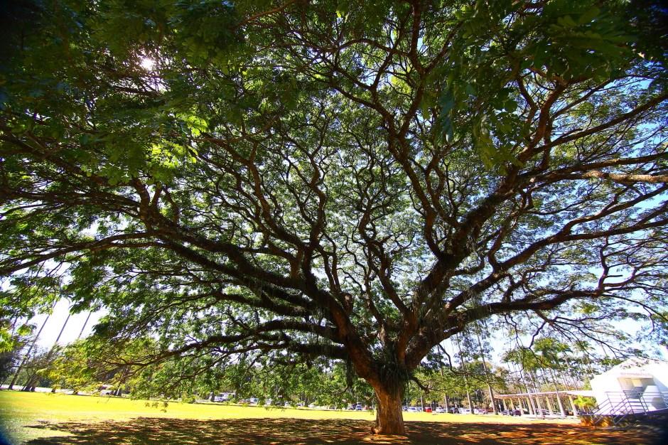 São José ganha destaque mundial por excelência na arborização